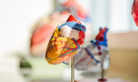 Krevní tlak souvisí se srdcem na obrázku.